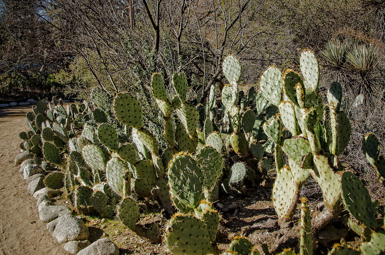 Garden bed filled with prickly cactus