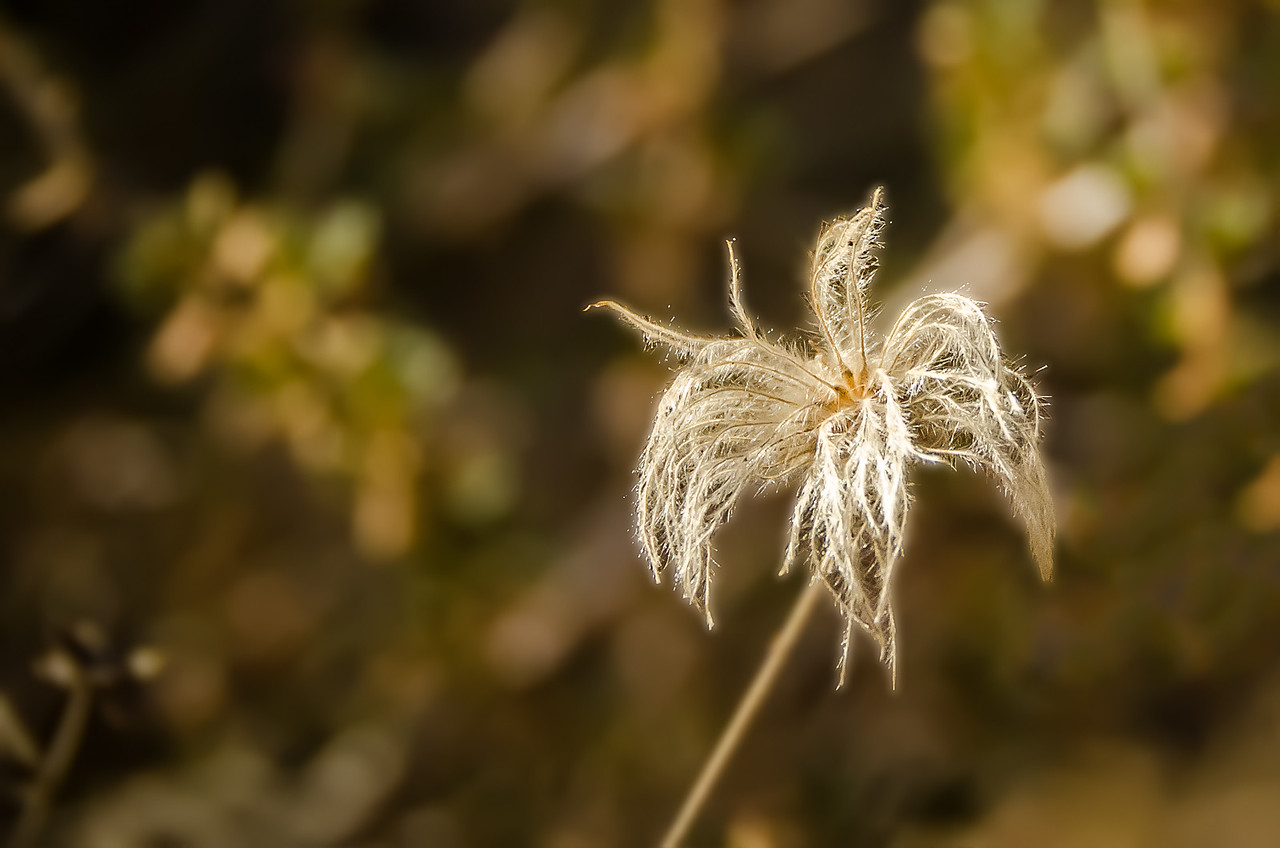 Garden flower with dry fronds